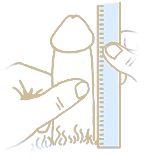 Measure-Penis