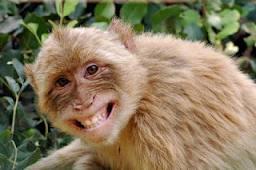 primate-ejaculations