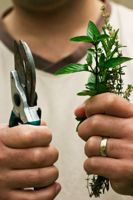 Can Herbs Increase Testosterone